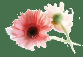 Logo-Blume-Gerbera